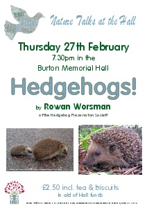 Hedgehogs by Rowan Worsman